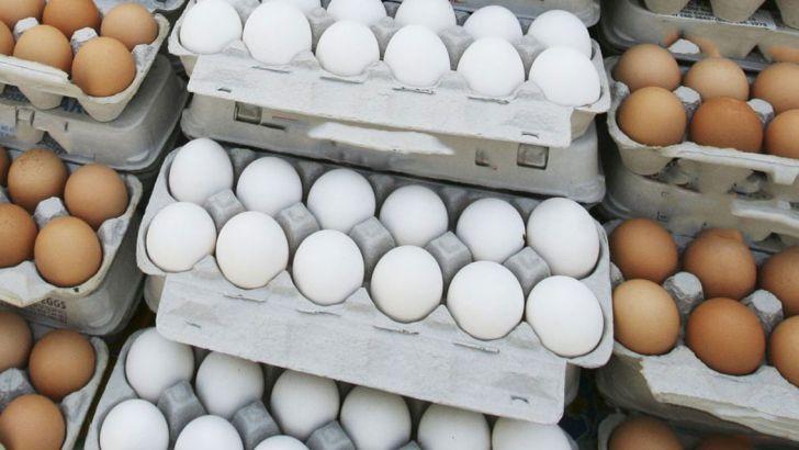 صادرات 470 تن تخم مرغ از کاشان به عراق و ترکیه