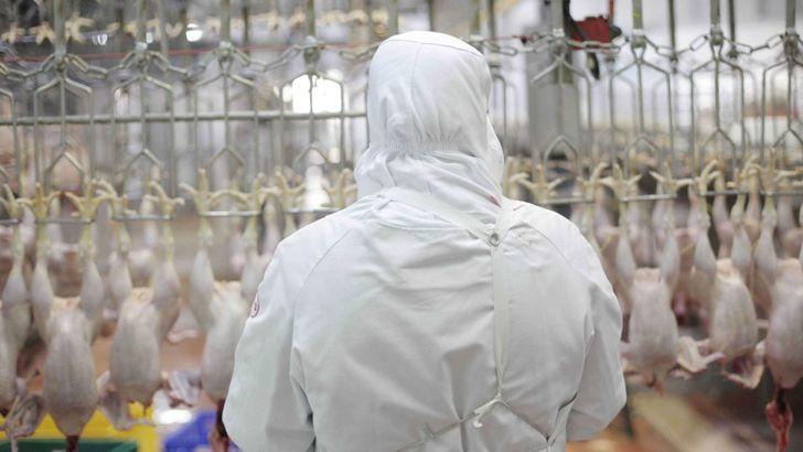 مجوز صادرات مرغ با عوارض ۱۵۰۰ تومانی تمدید شد
