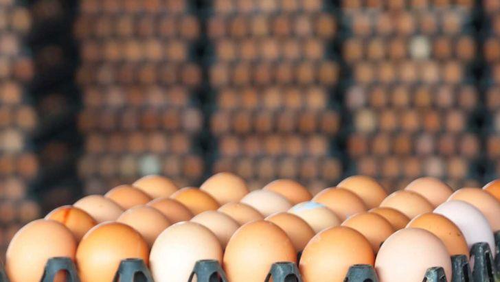 صادرات تخممرغ از کرمان به خارج از کشور
