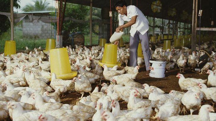 اعلام ضربالاجل برای کاهش قیمت مرغ