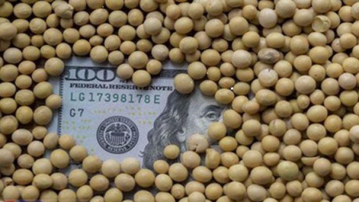 تلاش برای تامین ارز موردنیاز واردات نهادههای دامی
