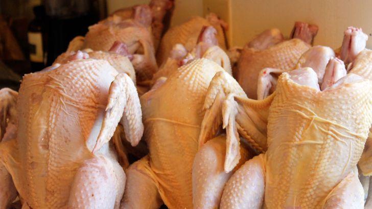 قیمت مرغ کاهش خواهد یافت