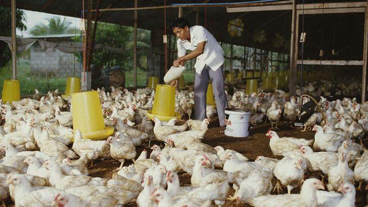 توزیع قطره چکانی نهاده دامی با نرخ مصوب