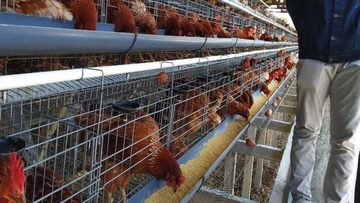 گله مندی کانون مرغ تخمگذار از عملکرد اتحادیه میهن-سند