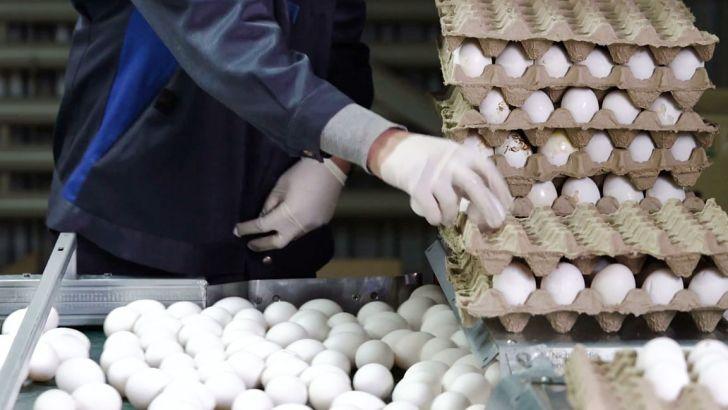 تولید کنندگان تخم مرغ ضرر میدهند
