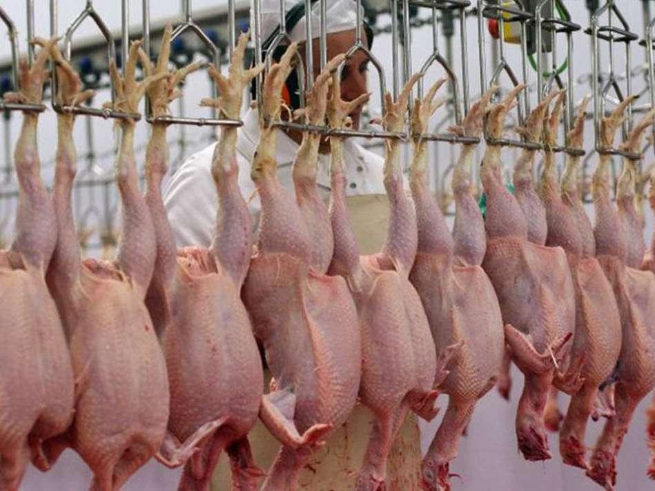قیمت جدید مرغ تعیین شد/ مرغ گرم ۱۵ هزار و ۷۵۰ تومان
