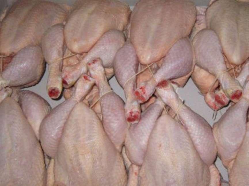 نباید انتظار کاهش قیمت مرغ را داشت