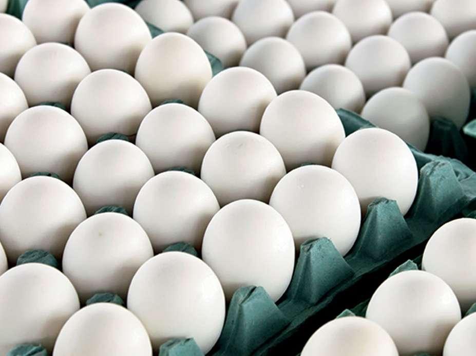 قیمت تخممرغ و جوجه یک روزه ماهانه تعیین میشوند