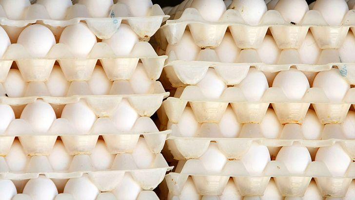 احتمال واردات تخم مرغ در صورت تداوم شرایط فعلی