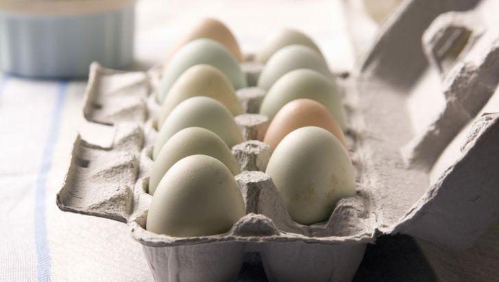 تغییر نرخ مصوب تخم مرغ درب مرغداری