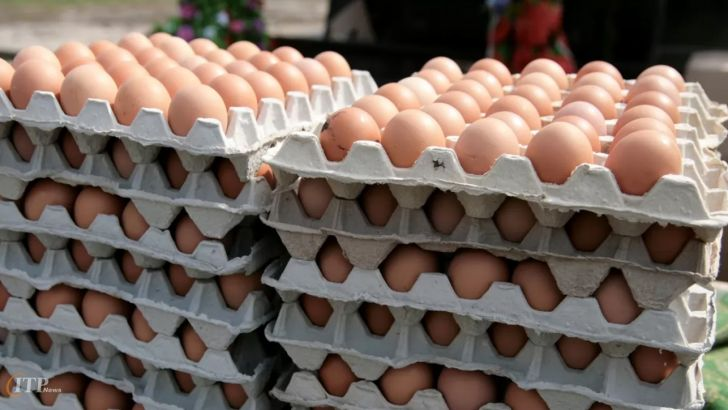 قیمت فعلی تخم مرغ مقرون بهصرفه نیست
