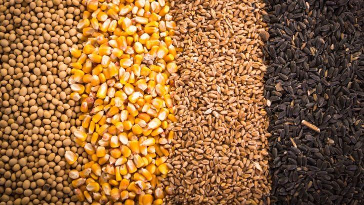 جهاد کشاورزی باید درباره بازار سیاه نهادهها پاسخ دهد