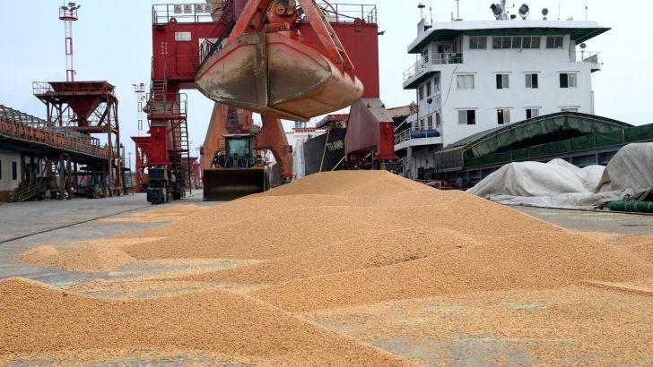 افزایش قیمت خوراک دام و طیور در بازارهای جهانی
