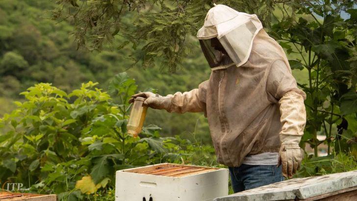 شکر در خدمت عسل