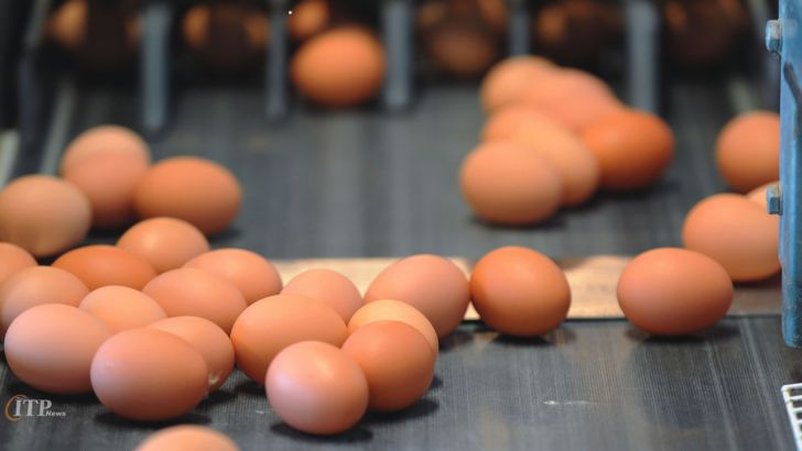 شاید تخم مرغ در کانال 20 هزار تومان قرار گیرد