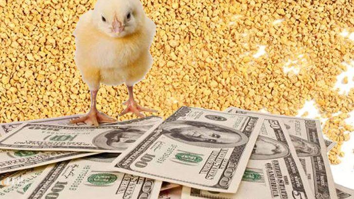 اسرار مالی خوراک دام وطیور
