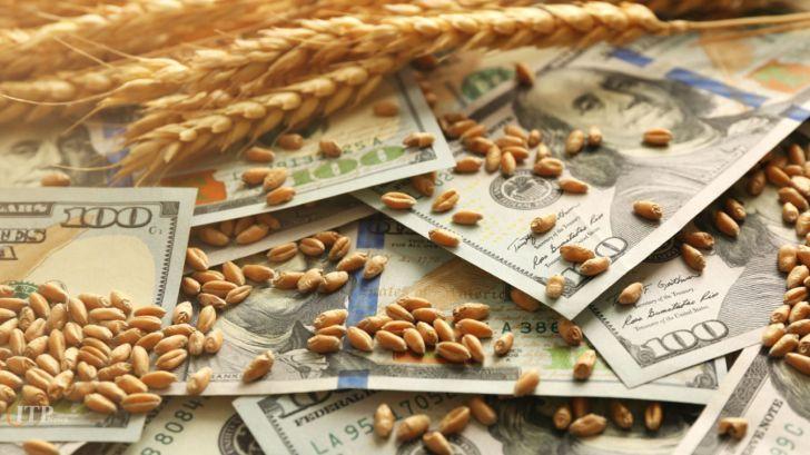 قیمت گندم و خوراک دام در بازارهای جهانی بالا رفت