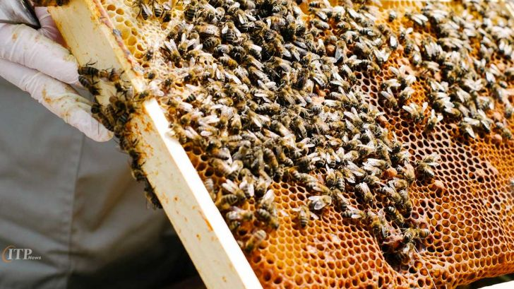 پرورش 5 هزار کلنی زنبور عسل در کهگیلویه