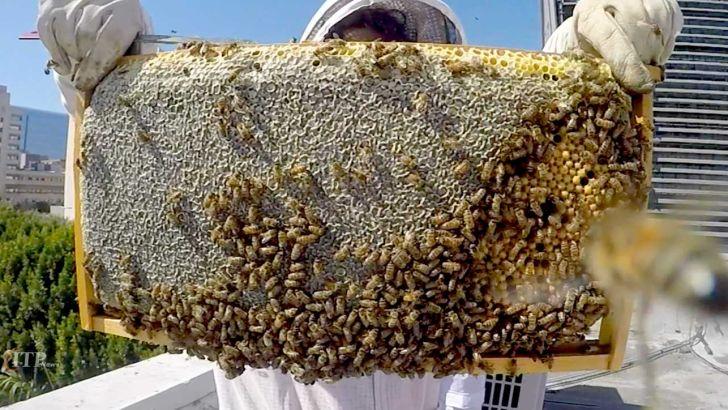 تولید بیش از 400 تن عسل در دامنه الوند