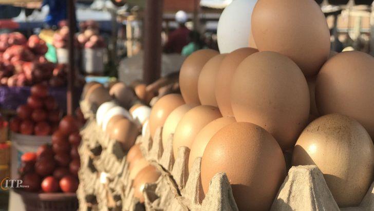 الزام در رتبهبندی و بستهبندی بهداشتی تخممرغ