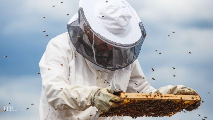 زنبورداران کردستانی ۱۳ میلیارد ریال تسهیلات دریافت کردند