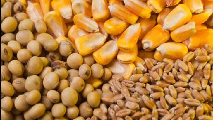 ناکارآمدی سامانه بازارگاه برای توزیع نهاده ها