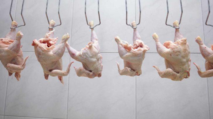 سه دلیل اصلی افزایش قیمت مرغ