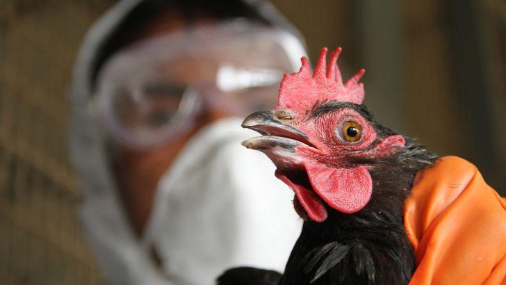 سه کانون آنفلوآنزای فوق حاد پرندگان در خراسان جنوبی مهار شد