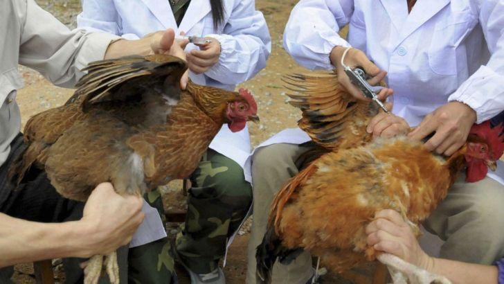 مشاهده بیماری آنفلوآنزای فوق حاد پرندگان در ۱۶ نقطه کشور