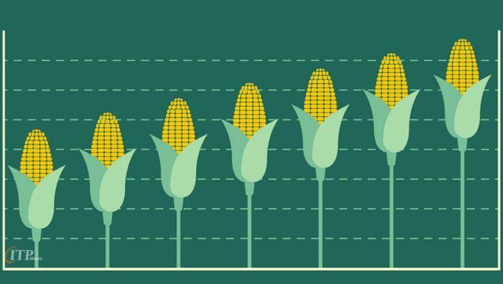 افزایش قیمت خوراک دام و طیور به بیشترین میزان 6 سال گذشته