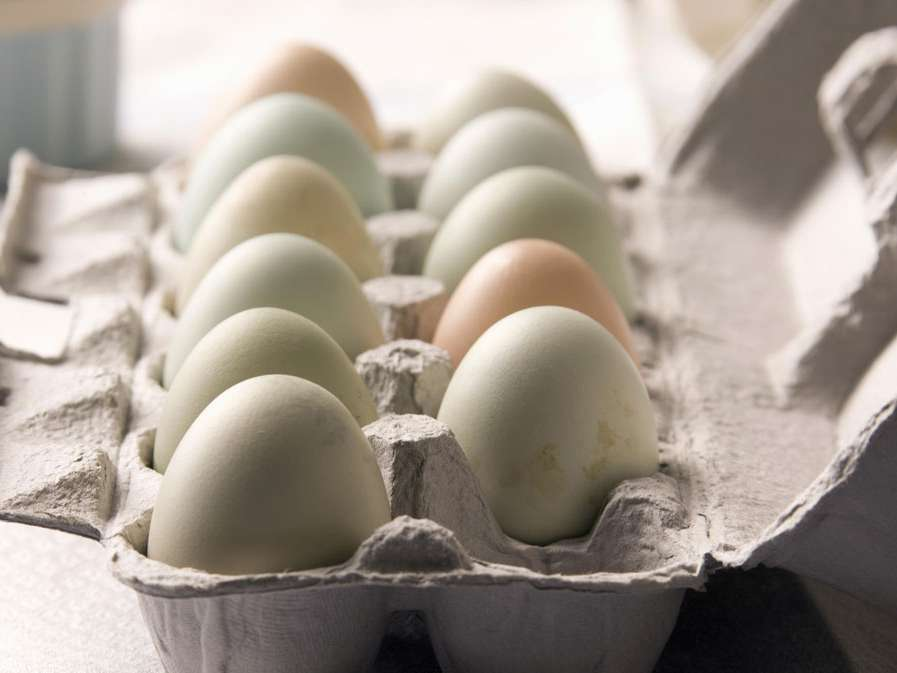 عرضه تخممرغ بستهبندی الزامی نیست