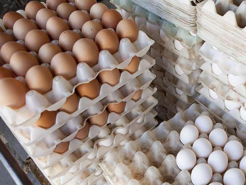 قاچاق تخممرغ هر شانه ۷۰ هزار تومان!