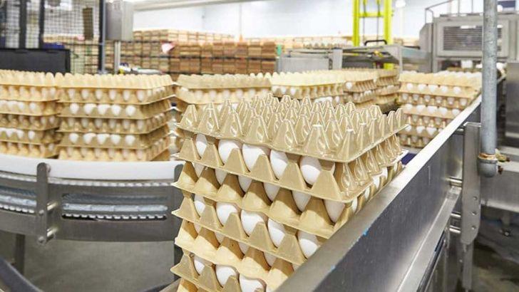قیمت فعلی تخم مرغ در بازار مورد تأیید نیست