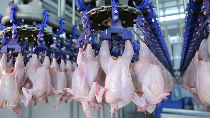افزایش قیمت مرغ به دلیل افزایش قیمت نهاده صحت ندارد