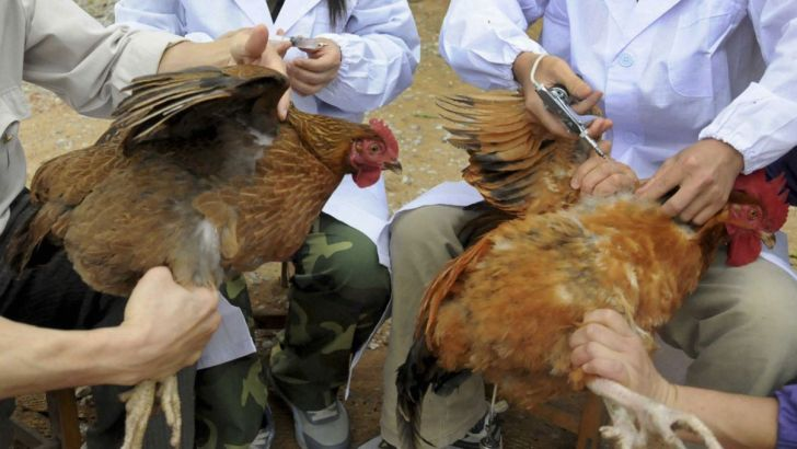 9 استان گرفتار آنفلوآنزای حاد پرندگان
