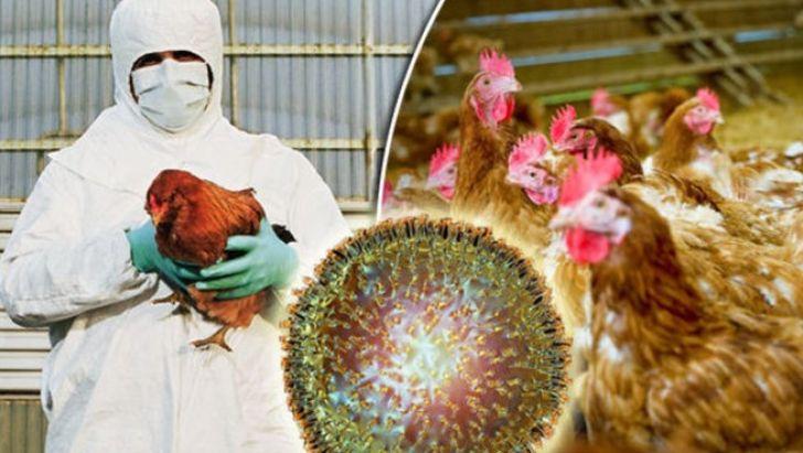 آخرین وضعیت آنفلوآنزای فوق حاد پرندگان در مرغداری های کشور
