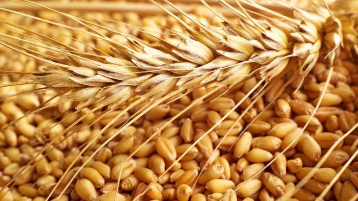 قیمت گندم و خوراک دام و طیور در بازارهای جهانی رشد کرد