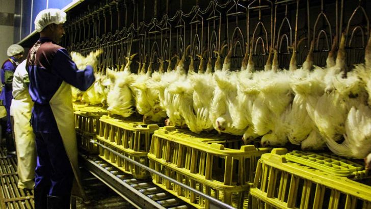 تامین مرغ با نرخ مصوب منوط به تحقق سهمیه جوجهریزی است