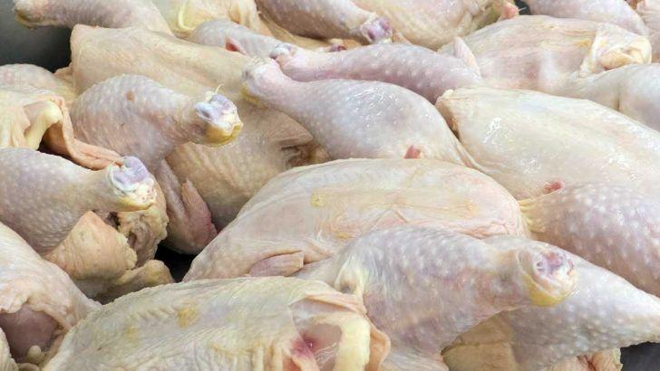 نهاده در ازای گوشت مرغ