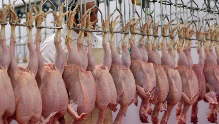 کمبودی در تامین مرغ در ایام پایانی سال وجود ندارد