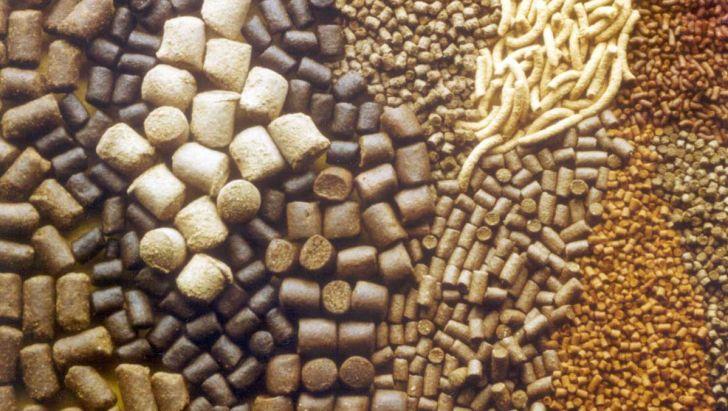 افزایش بی رویه قیمت خوراک دام نشانگر وجود بیتدبیری است