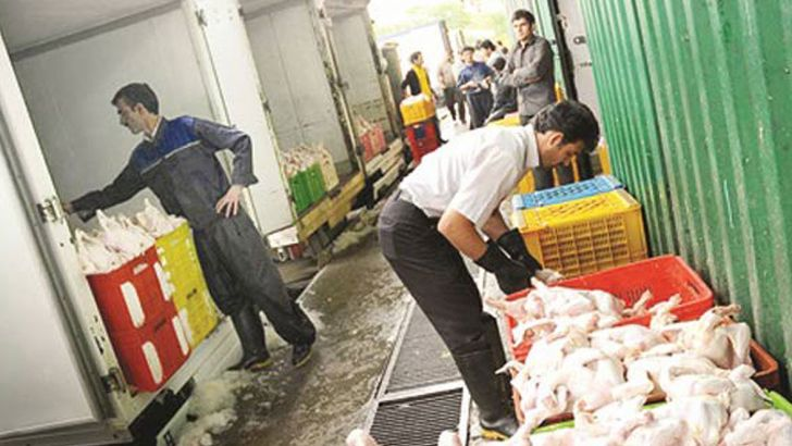 نظارت بر روند توزیع عرضه مرغ تشدید می شود