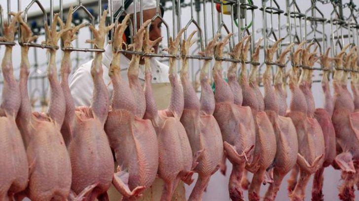 قیمت مرغ و تولید مازاد بر مصرف