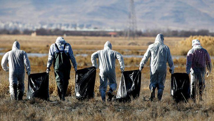 ۶۳ کانون گرفتار آنفلوانزای فوق حاد پرندگان