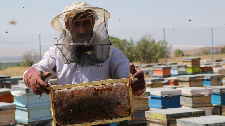زنبورداران شناسنامهدار شدند
