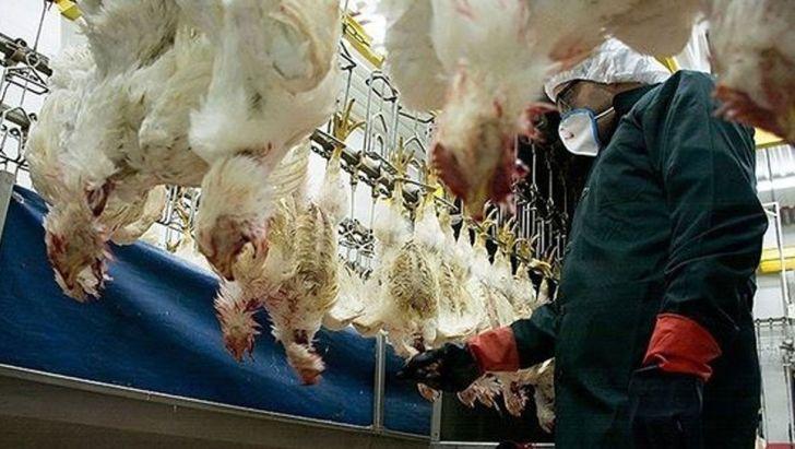 مشکلی برای تامین مرغ در روزهای ۱۲و ۱۳ فروردین وجود ندارد