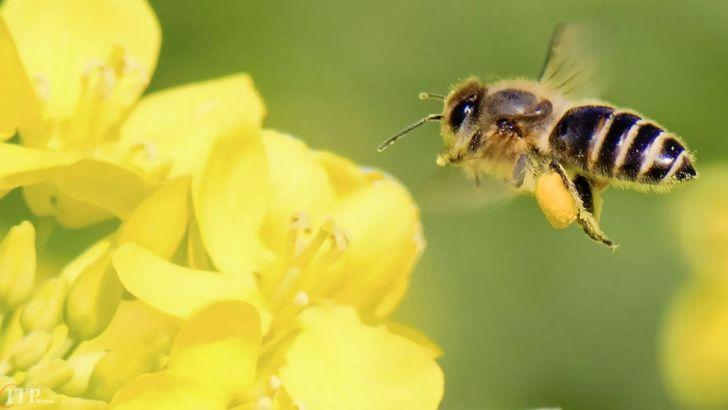 زنبورهای خراسان جنوبی دو برابر سال ۹۸ عسل تولید کردند