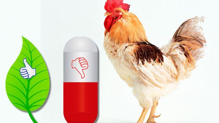 اعطای وام 10 میلیون دلاری برای پروژۀ کاهش مصرف آنتی بیوتیک در مرغداری