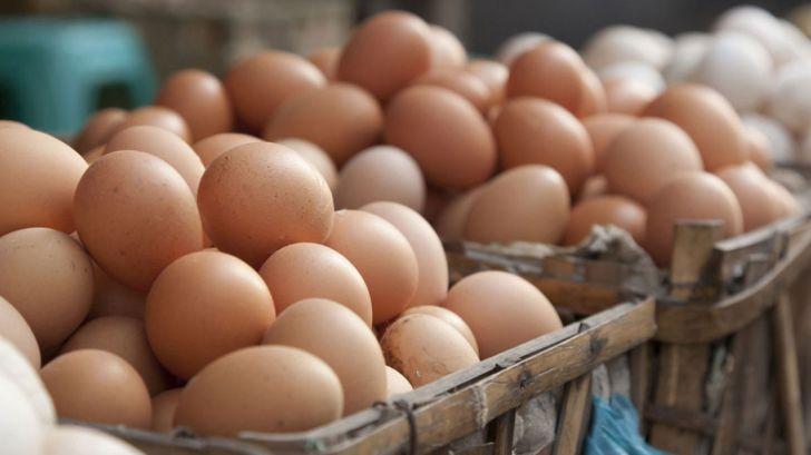 خرید حمایتی تخم مرغ برای جلوگیری از افت تولید ضروری است