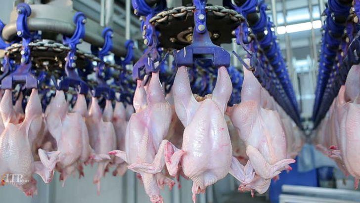 افزایش تولید مرغ در آستانه ماه رمضان
